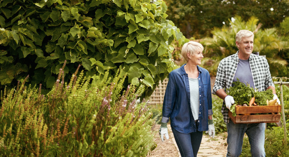 Mature couple walking through a garden. The man is holding a crate of vegetables.