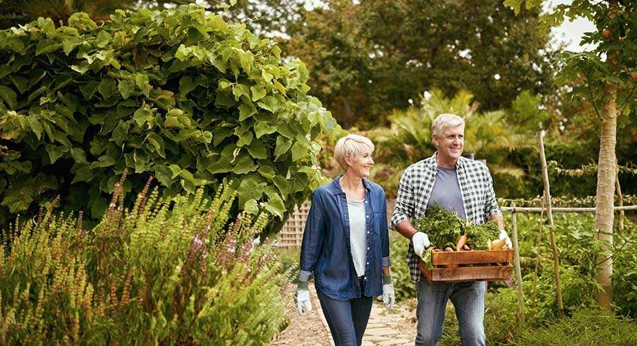 older couple walking through garden carrying crate of vegetables